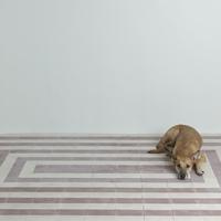 24-01-15_GLEN_floor