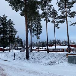 Vinter skogbaksida