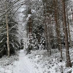 Vinter ute skog