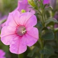 blomma hemsidan
